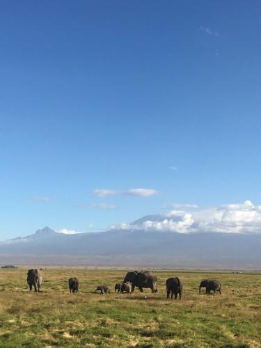 アンボセリはキリマンジャロと象の雄大な公園