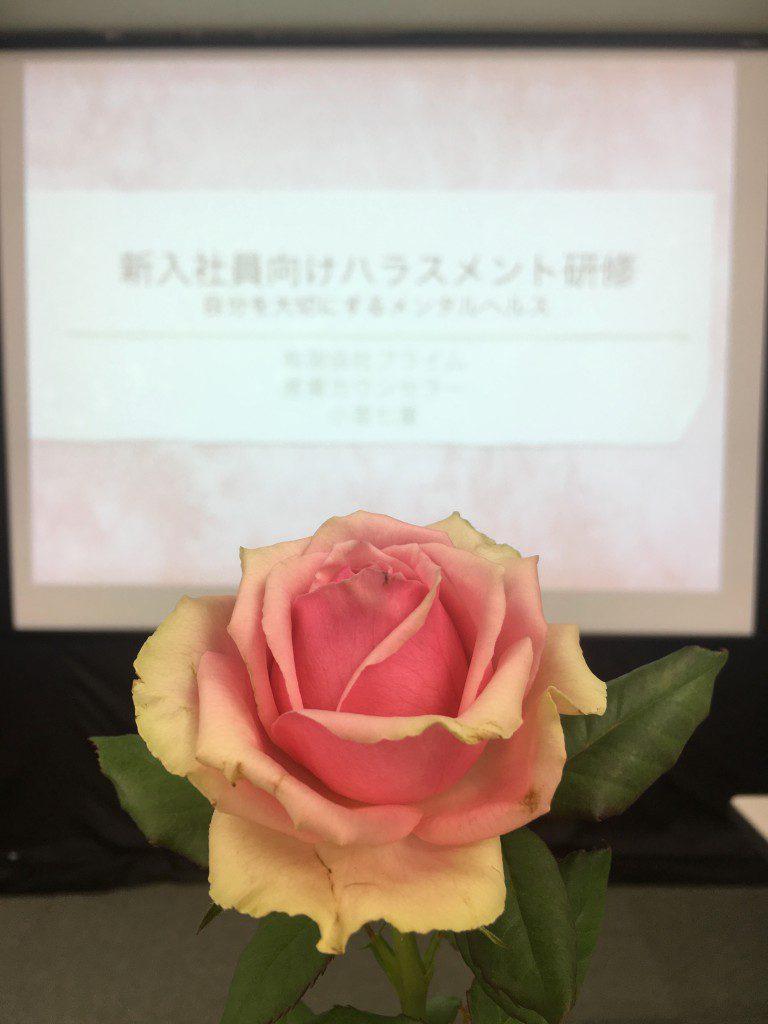 研修会場を癒やしてくれるバラ