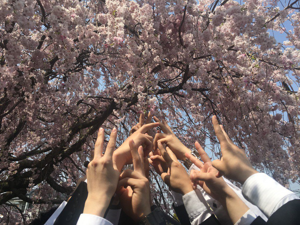 桜に向かって、より高く!